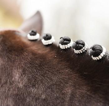 Braid Bands Bling on Mane