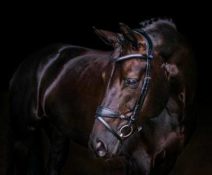 Get Set Revolution Bridle shown on Horse in Black